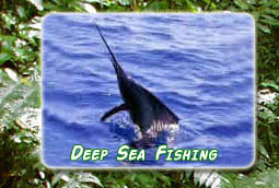 Costa Rican Deep Sea Fishing