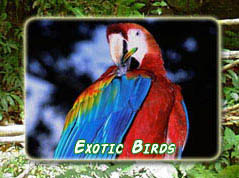 Exotic Birds of Costa Rica